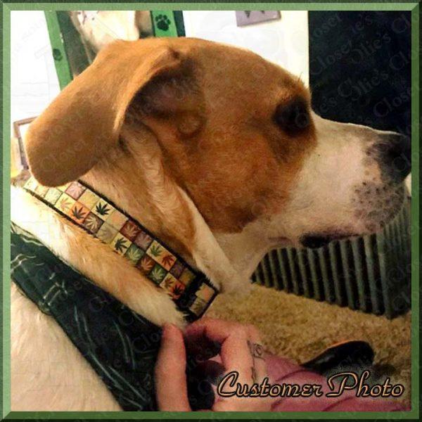 Cannabis Pot Colorful Squares Dog Collar Customer Photo Product Image