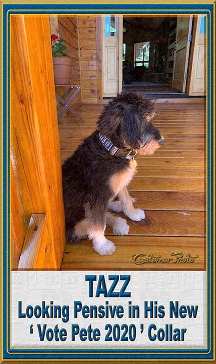 Pete Buttigieg for President 2020 Customer Photo Dog Collar Product Image No3