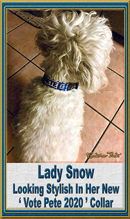Pete Buttigieg for President 2020 Customer Photo Dog Collar Product Image No9